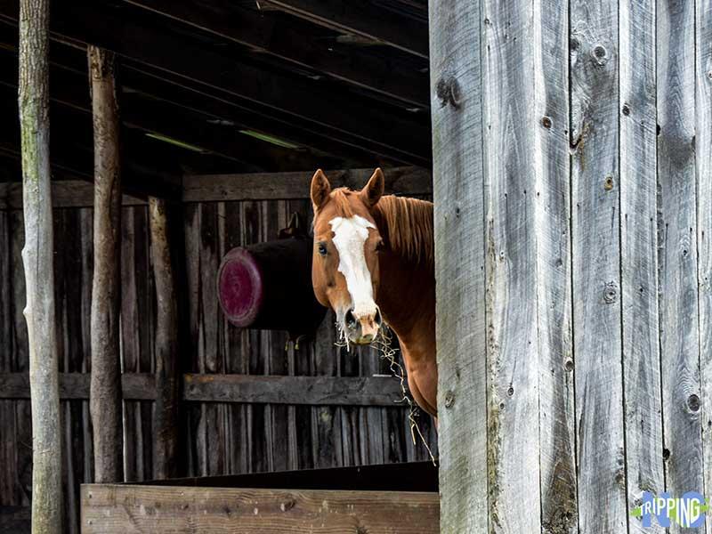 Apple Hill Farm North Carolina