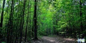 The Best Outdoor Things to do in Durham North Carolina