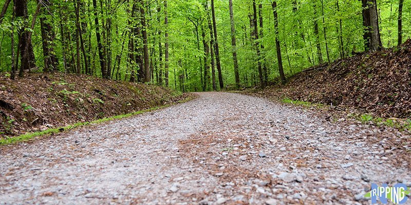 Things to Do in North Carolina Duke Forest Hiking