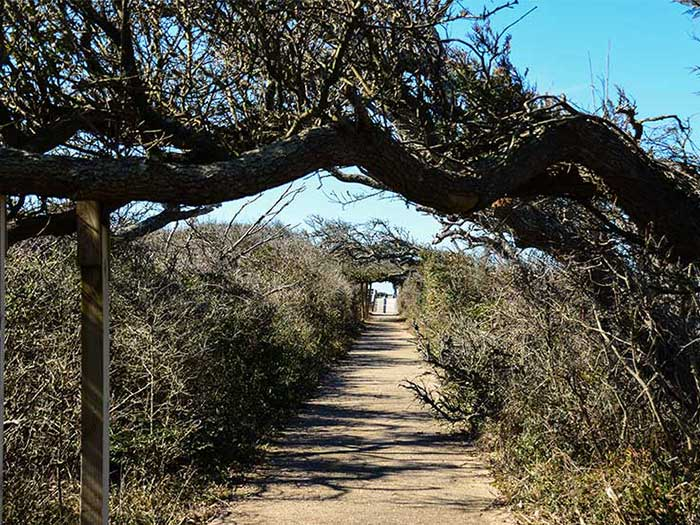 What to Do in Outer Banks Pea Island National Wildlife Refuge Image