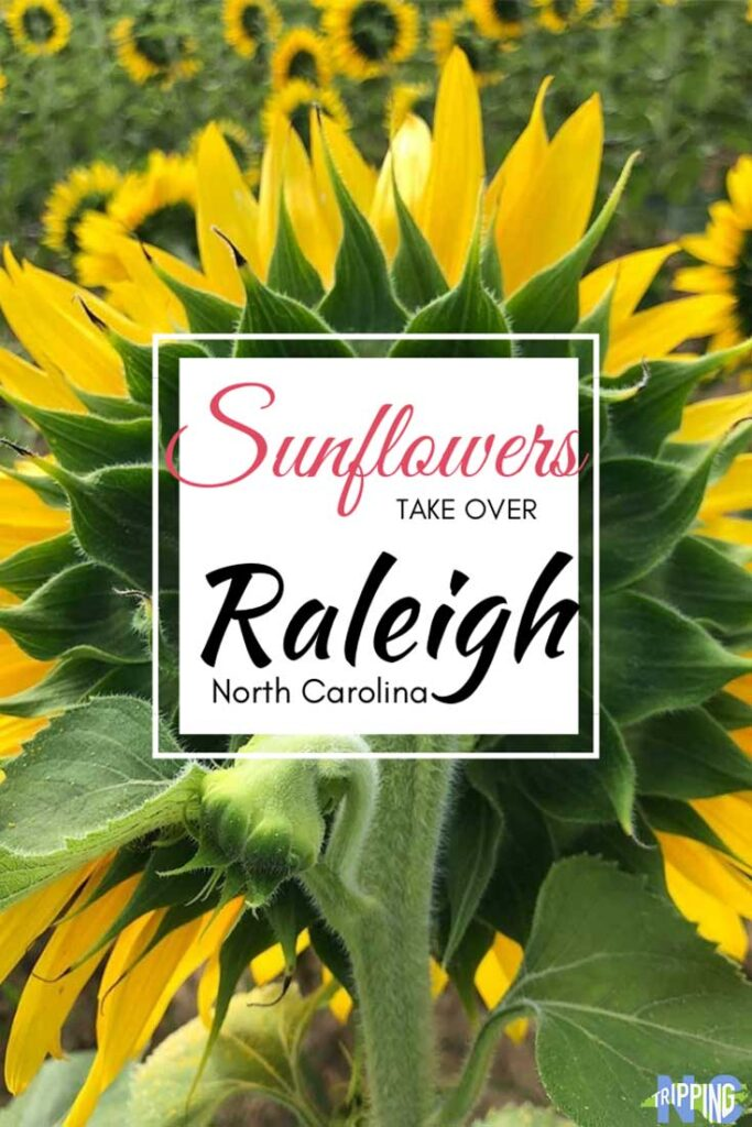 Where to find Sunflowers in Raleigh NC