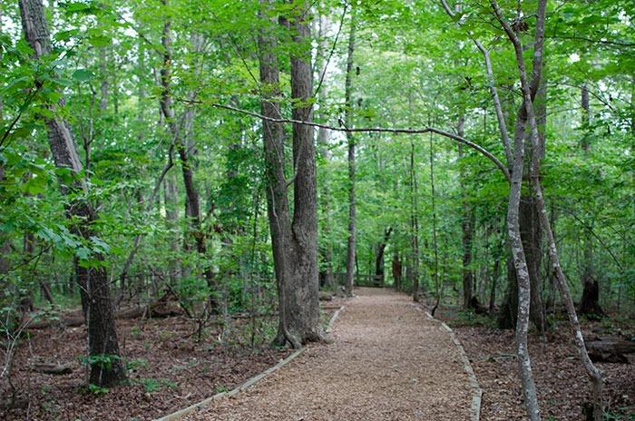 Cary NC Hemlock Bluffs Nature Preserve Image