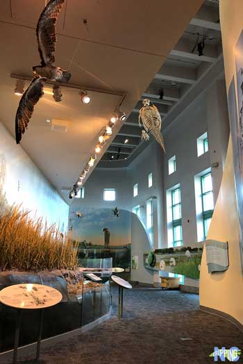 Day Date Things to Do in Raleigh NC Museum of Natural Sciences Inside