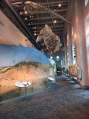 Museum of Natural Sciences First Floor Coast Exhibit
