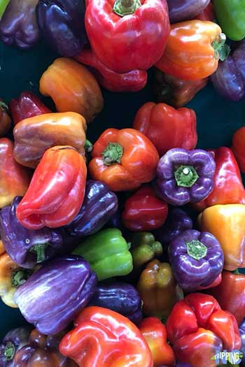 Spring Things to Do in North Carolina Farmers Markets Image