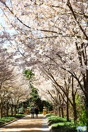 Spring Things to Do in North Carolina Travel Guide Duke Gardens Image