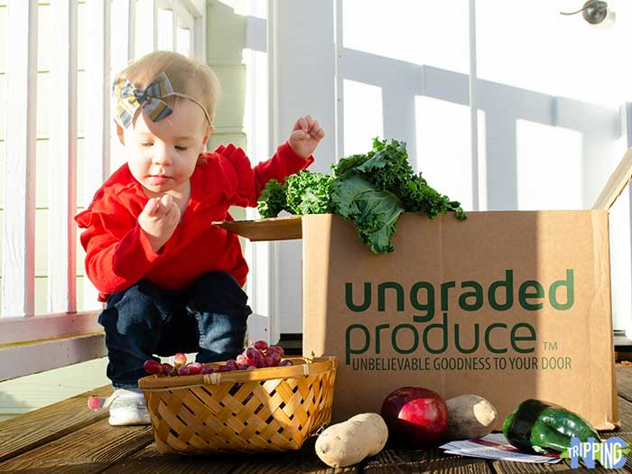 Ungraded Produce Founder Interview by NC Tripping Image
