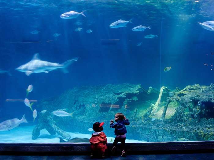 Outer Banks NC Things to Do NC Aquarium on Roanoke Island Image