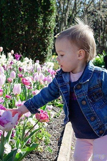 Free Stuff to Do in Durham Sarah P Duke Gardens Image
