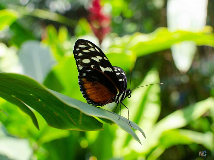 Butterfly House Durham NC Image