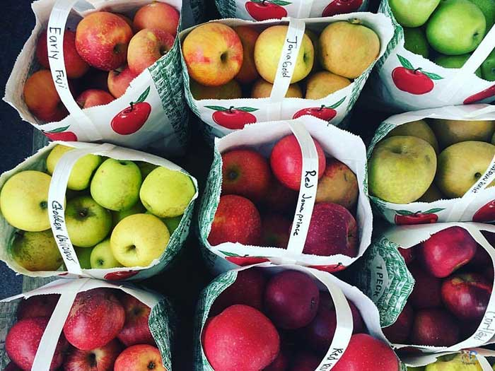 September Events in North Carolina Apples Image