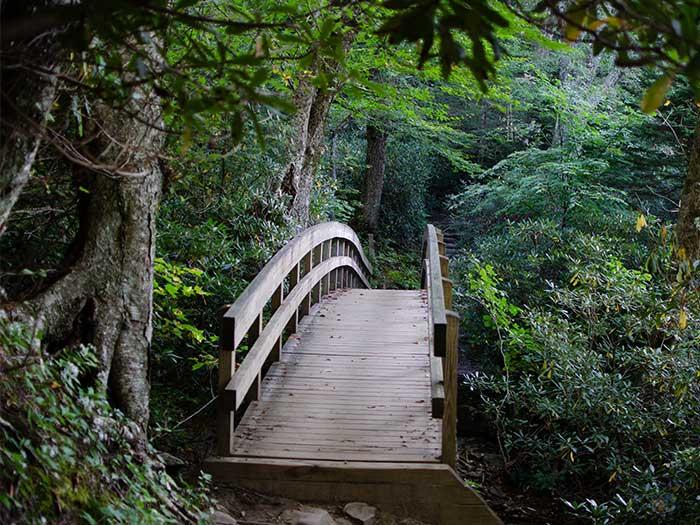 Best Hikes in North Carolina Rough Ridge Trail Image