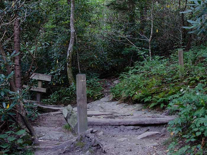 Hiking Trails in NC Rough Ridge Trail Image