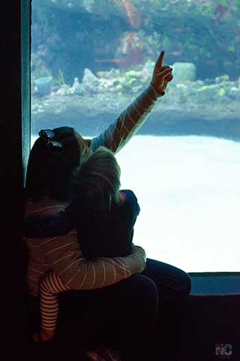 Things to Do in Wilmington NC Aquariums in Fort Fisher Image