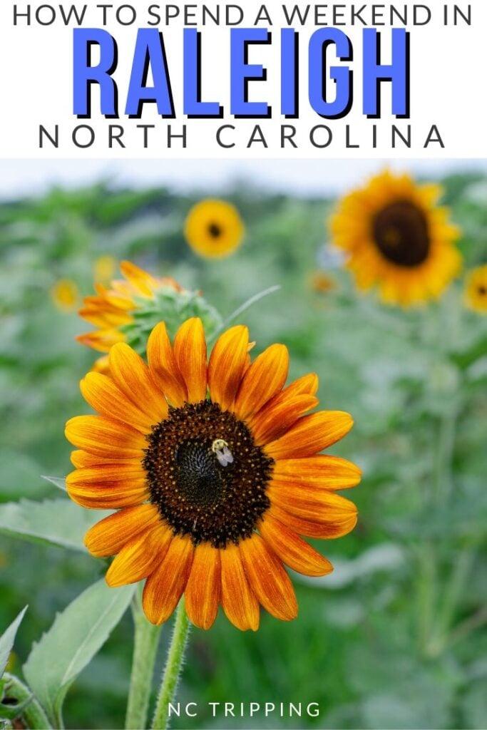 Raleigh Travel Pinterest Image 4
