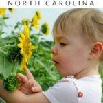 Raleigh Travel Pinterest Image 6