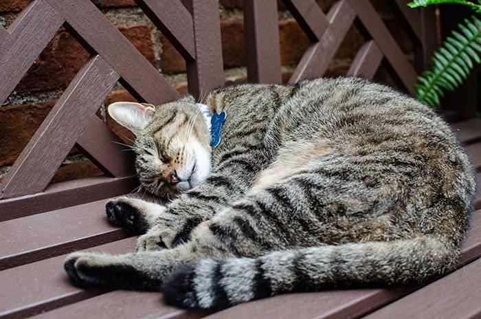 Winston-Salem NC Cute Cat Image