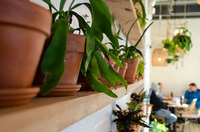 Best Coffee Shops in Durham NC Cloche Image