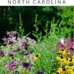 Chapel Hill Pinterest Image 9