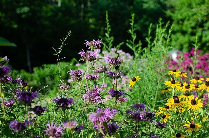 NC Botanical Gardens Chapel Hill Image