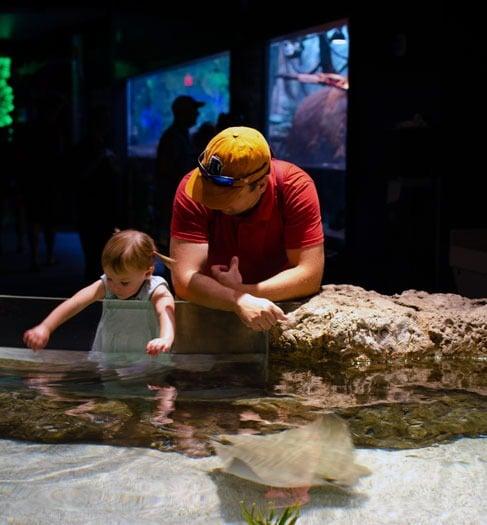 Aquarium Greensboro NC Rays Image