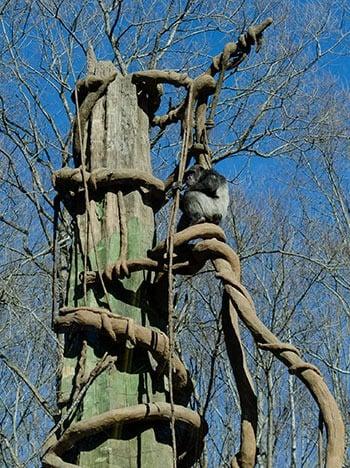 Asheboro NC Zoo Image