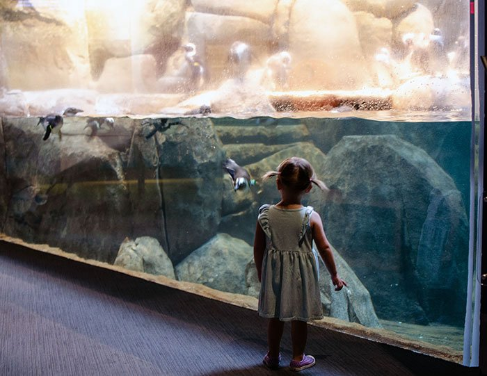 Day Trips from Durham Raleigh Chapel Hill Greensboro Science Center Image