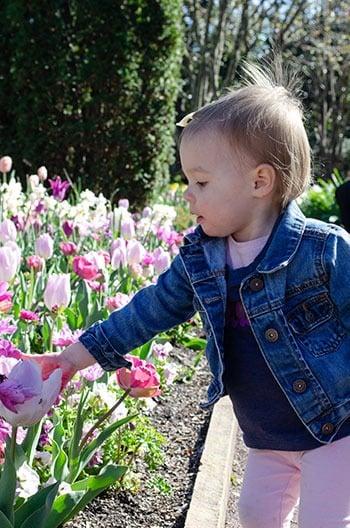 Durham NC Sarah P Duke Gardens Image