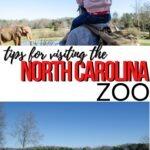 NC Zoo Pinterest Image 6 1