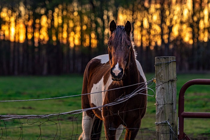 Clayton NC Horse Image by Jonathan Levin Pixel Mojo Productions
