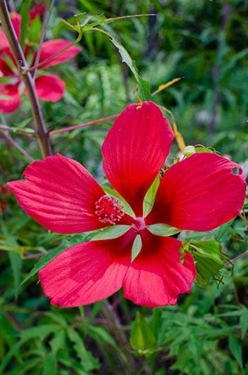 Best Botanical Garden in North Carolina Fayetteville Image