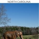 CLT Day Trips Pinterest Image 1