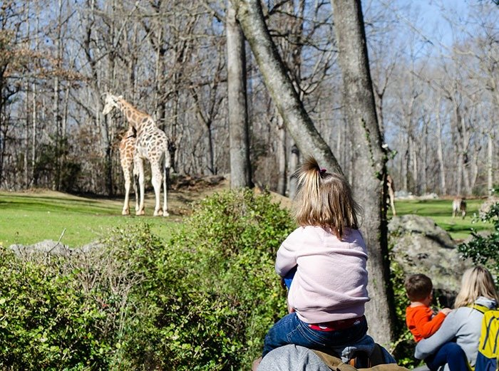Day trips in NC Asheboro Zoo Image