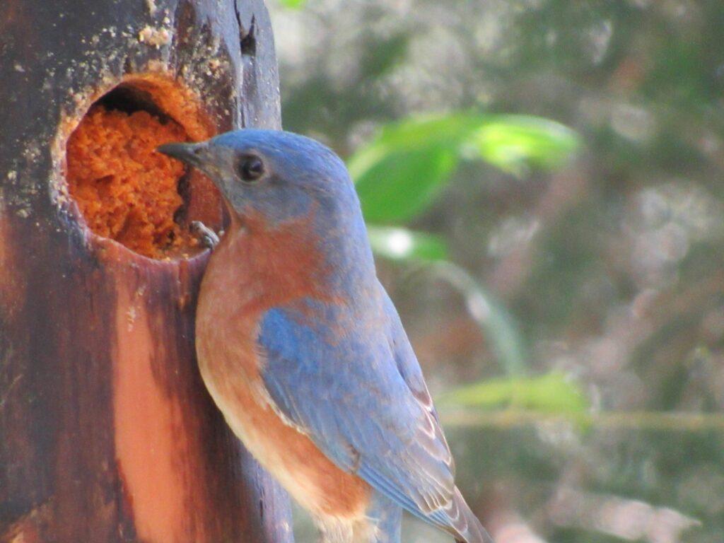 Durham bird image