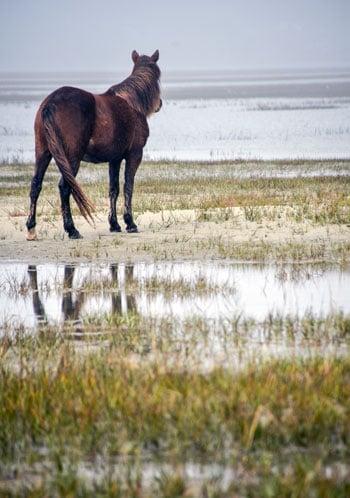 One Horse at Rachel Carson Reserve