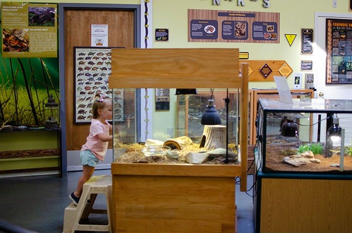 Clark Park Nature Center is the most educational of our things to do with kids in Fayetteville.