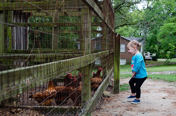 Fayetteville NC Gillis Hill Farm