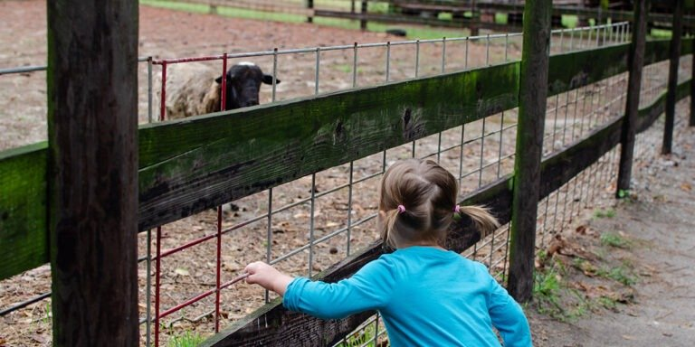 Things to Do with Kids in Fayetteville NC