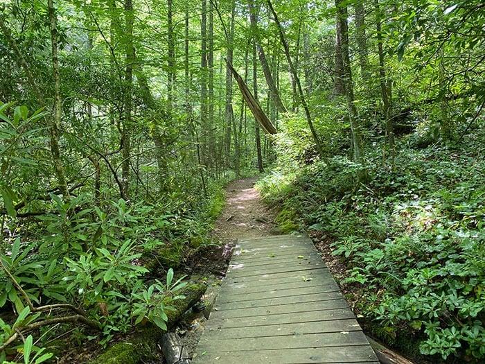 Trail at Crabtree Falls