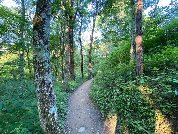 hiking trail at Otter Falls