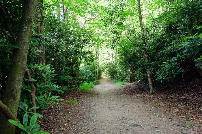 Glen Burney Trail