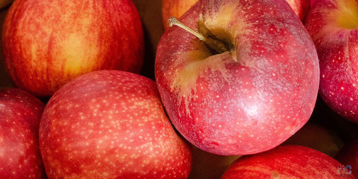 Our Guide will get you ready for Apple Picking in North Carolina.