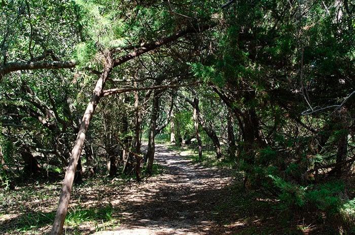 Buxton Woods