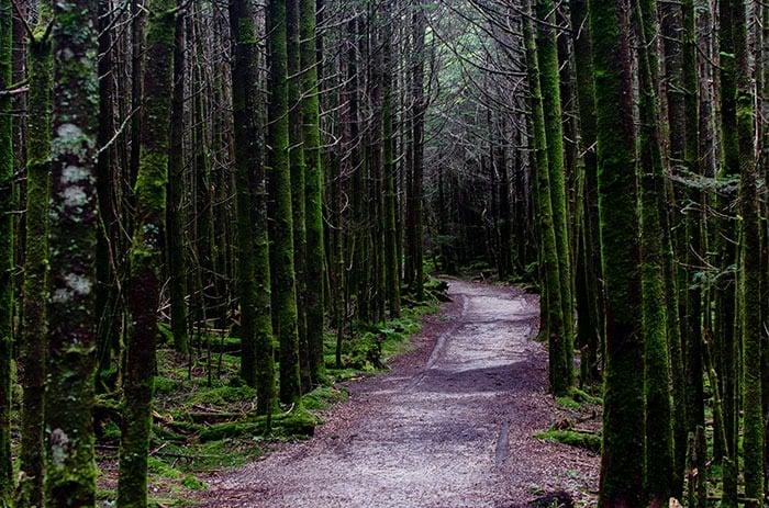 Deep Gap Trail Mt Mitchell
