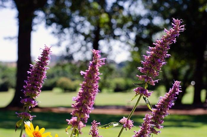 Dix Park Flowers