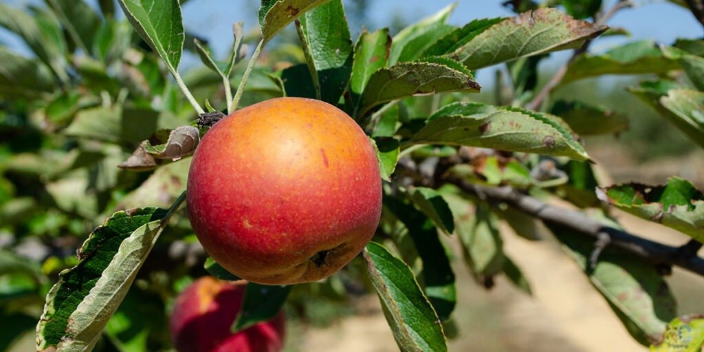Millstone Creek Orchards in Ramseur brings Apple Cider Slushies, Pumpkins, and More Farm Fun to Your NC Bucket List!