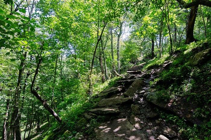 Trail at Bearwallow Mountain near Asheville