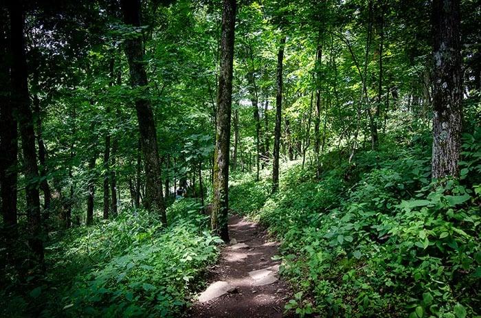 Trail at Bearwallow Mountain
