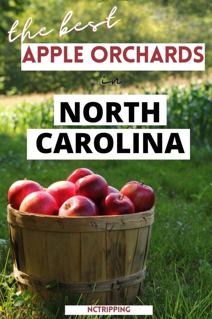apple orchards pinterest