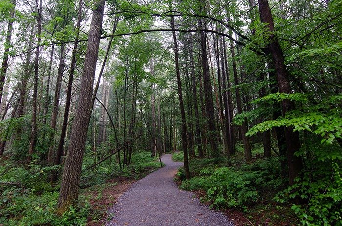Dupont State Recreational Forest Hiking Trail